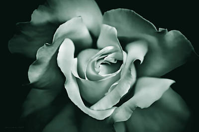Photograph - Rose Flower In Shades Of Green by Jennie Marie Schell