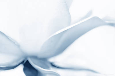 Photograph - Rose Flower Petals Soft Blue by Jennie Marie Schell