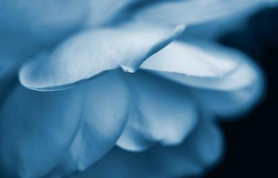 Photograph - Rose Flower Petals Blue by Jennie Marie Schell