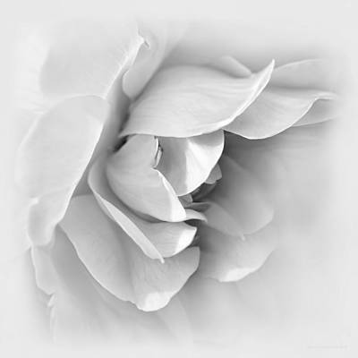 Photograph - Rose Flower Soft Gray by Jennie Marie Schell