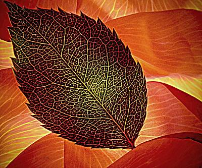 Rose Foliage On Rose Petals Art Print by Chris Berry