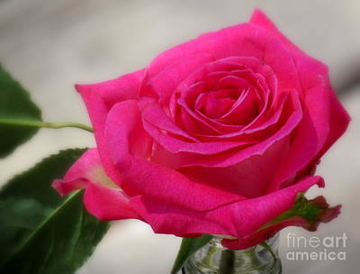 Photograph - Rose by France Laliberte