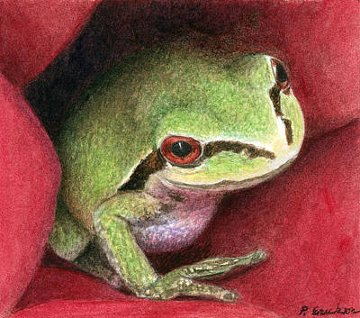 Watercolor. Frogs Painting - Rose Frog by Pat Erickson
