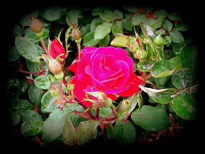 Photograph - Rose Garden Centerpiece by Pamela Hyde Wilson