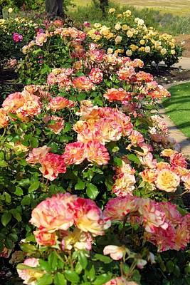 Photograph - Rose Garden by Jane Girardot
