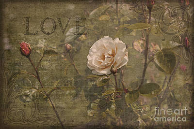Photograph - Rose Garden by Liz  Alderdice