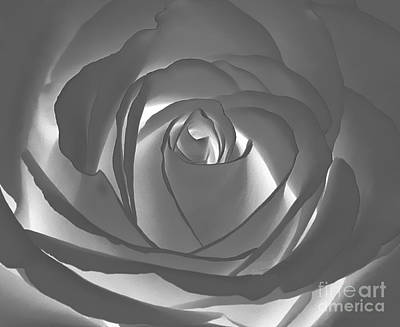 Art Print featuring the photograph Rose by Geraldine DeBoer