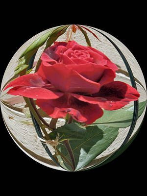 Photograph - Rose Globe by Valerie Bruno