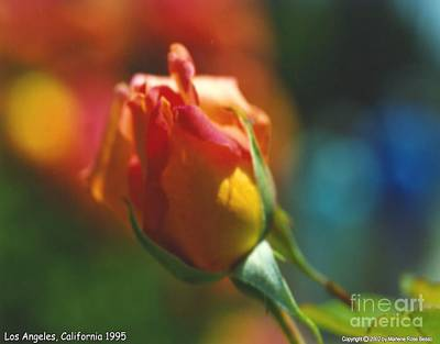 Photograph - Rose Glow by Marlene Rose Besso