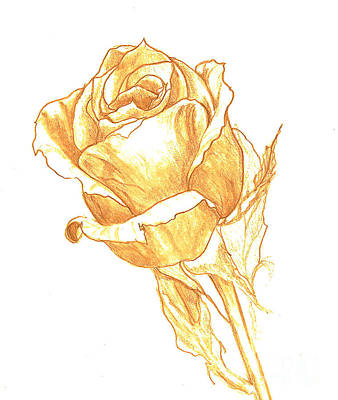 Drawing - Rose Gold by Heather  Hiland