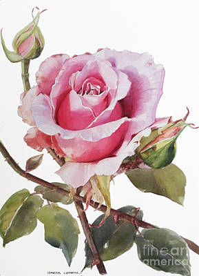 Painting - Pink Rose Grace by Greta Corens