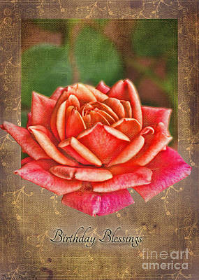 Photograph - Rose Greeting Card Birthday by Debbie Portwood