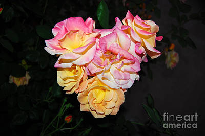 Photograph - Rose Heart At Night by Debra Thompson