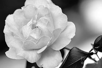 Photograph - Rose In Black And White By Kaye Menner by Kaye Menner