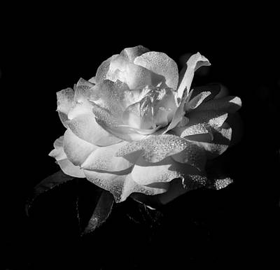 Rose In Black And White Art Print by Kenneth Blye