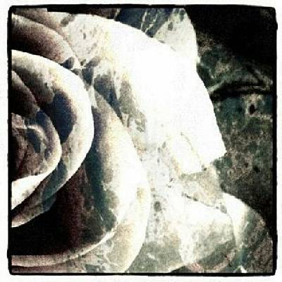 Decorative Wall Art - Photograph - Rose In Retro by Jacqueline Schreiber