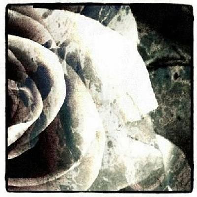 Rose In Retro Art Print
