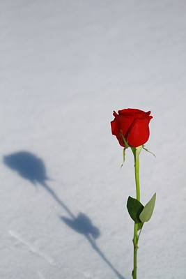 Love Photograph - Rose In Snow Spring Approaches by Dan Sproul