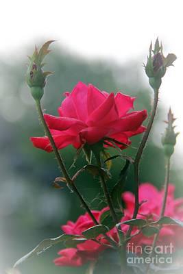 Rose In The Fogg Art Print by Yumi Johnson