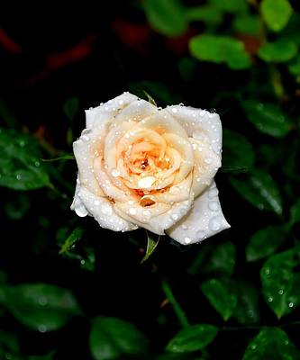 Art Print featuring the photograph Rose In The Rain by Deena Stoddard