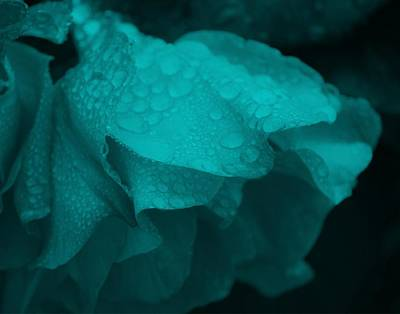 Photograph - Rose In Turquoise by Jocelyn Friis