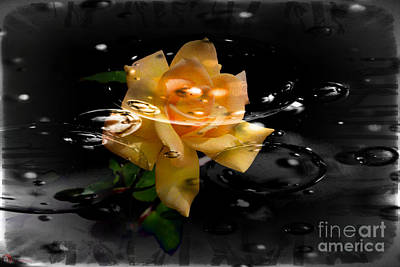 Photograph - Rose In Water by Rob Heath