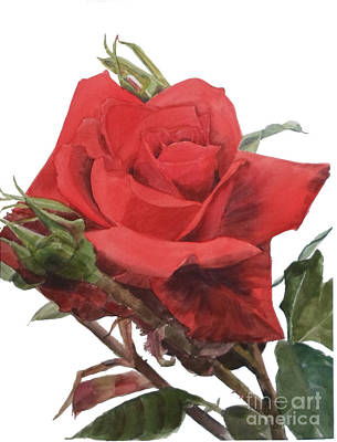 Movies Star Paintings - Watercolor of a Single Red Rose on a Stem with Buds I call Rose Jake by Greta Corens