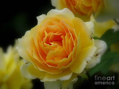 Photograph - Rose Jaune by France Laliberte
