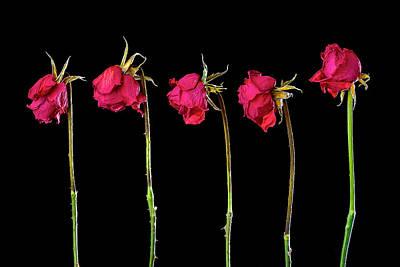Rose Lineup Art Print by Mauro Celotti