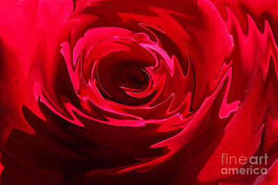 Photograph - Rose Liquefied Photo by Meg Rousher