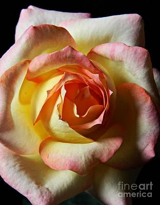 Photograph - Rose Macro 2 by Chalet Roome-Rigdon