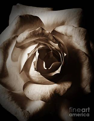 Photograph - Rose Macro 2 Sepia by Chalet Roome-Rigdon