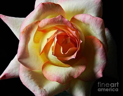 Photograph - Rose Macro by Chalet Roome-Rigdon