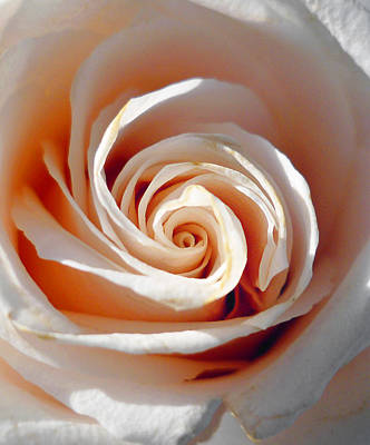 Roses Royalty-Free and Rights-Managed Images - Rose Magnificent Spiral  by Irina Sztukowski