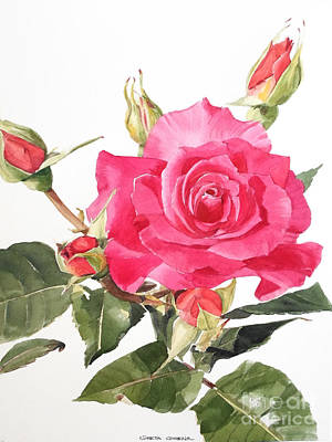 Painting - Watercolor Red Rose Margaret by Greta Corens