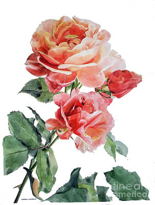Painting - Watercolor Of Red Roses On A Stem I Call Rose Maurice Corens by Greta Corens