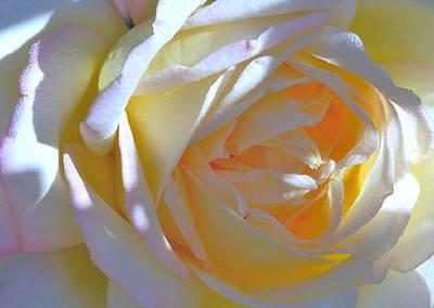 Rose Art Print by N S
