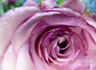 Photograph - Rose Neptune by Marlene Rose Besso