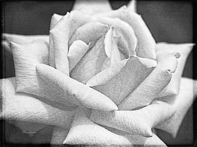 Photograph - Rose Of Long Forgotten Dreams by Georgiana Romanovna