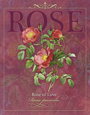 Rose Of Love Print by Tammy Apple