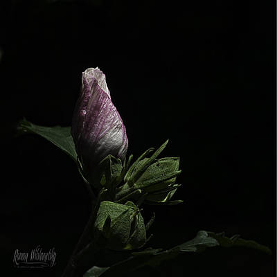 Photograph - Rose Of Sharon At Dusk by Roman Wilshanetsky