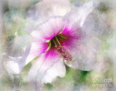 Pink Rose Bushes Digital Art - Rose Of Sharon by Barbara Chichester