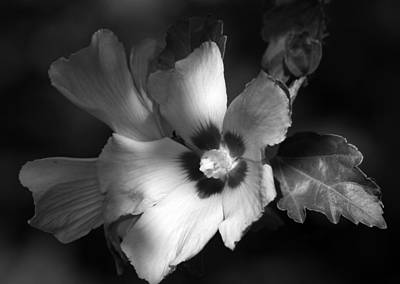 Rose Of Sharon Photograph - Rose Of Sharon by Donna Kennedy