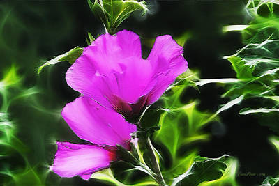 Photograph - Rose Of Sharon Electrified by Ericamaxine Price