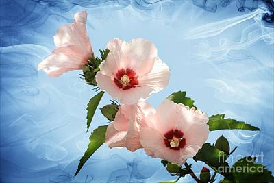 Rose Of Sharon Art Print