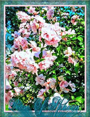 Althea Photograph - Rose Of Sharon -hibiscus Syriacus by Margaret Newcomb