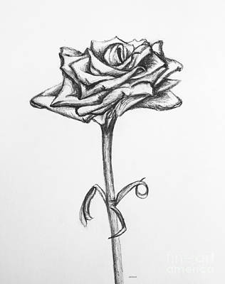 Simplicity Drawing - Rose Of Spring Hill by Alyssa Rogers