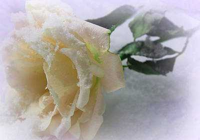 Magical Photograph - Rose Of Winter by The Art Of Marilyn Ridoutt-Greene