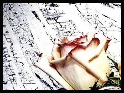 Rose On Crackle Background Print by Marsha Heiken