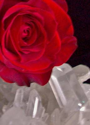 Wild Weather - Rose on Quartz by  Sharon Ackley